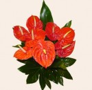 8 Red Anthuriums